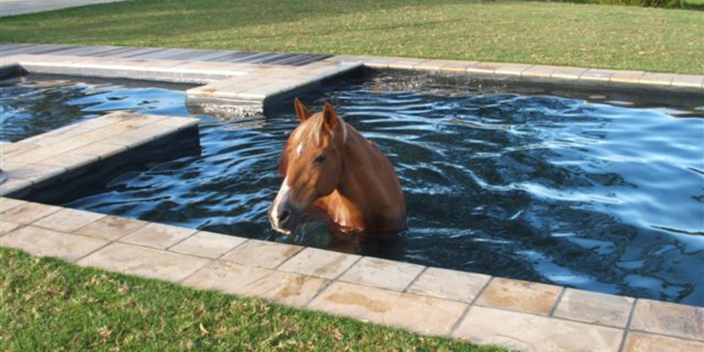 Solar Pool Heating - South Africa - Case Study - Image 13